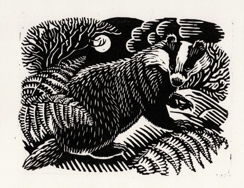 badger linocut by richard allen for framing nature by laurence rose